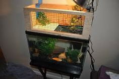 Diy Turtle Basking Spot Turtles And Such Pinterest The Plastics The O Jays And Plastic