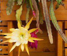 10-sorprendentes-plantas-para-cultivar-en-maceta-07
