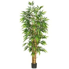 Often called Buddha's Belly Bamboo, the 6' Belly Bamboo Silk Tree features seriously sturdy trunks for an authentic reproduction of a classic bamboo tree
