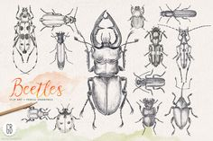 Check out Hand drawn pencil beetles bugs by GrafikBoutique on Creative Market