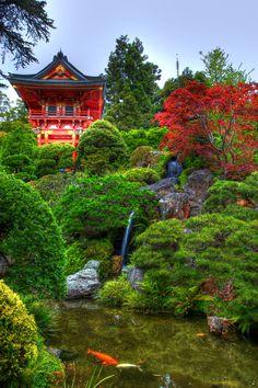 """Kissing Koi's - San Francisco Japanese Tea Garden"" by Alexander Lee on 500px - San Francisco Japanese Tea Garden, San Francisco, California"