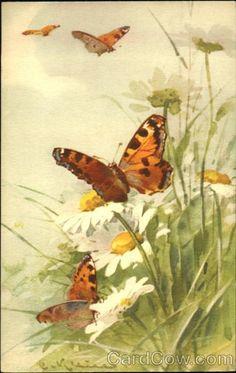 Butterflies C. Klein Flowers