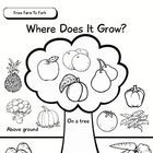 Students colour, cut and paste fruit and vegetable pictures on the Where Does It Grow