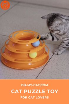 Magic ball spiral composed of 3 floors (supplied with the 3 balls) which will easily distract your little apartment predators. 3 Balls, Cat Products, Cat Accessories, Puzzle Toys, 3 Things, Cat Toys, Cool Cats, Spiral, Floors