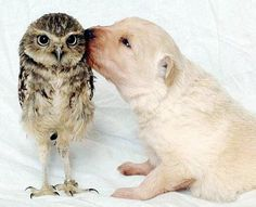 Puppy and owl.