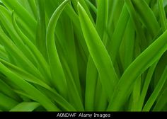 green leaves make a beautiful abstract