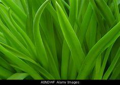 Abstract macro shot