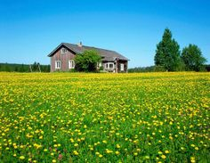 Finland, The half a million holiday cottages, or 'mökki' in Finnish, are proof…