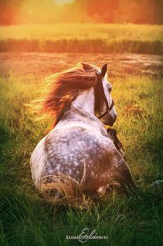 Equine sunset dream
