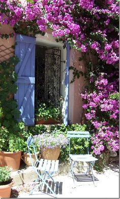 Beautiful bougainvillea in the South of France.
