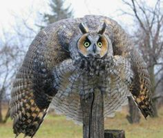 Funny Owls Pictures, Jokes and Amusing Stories