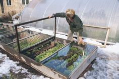 With a cold frame like this, you can grow greens and other cool-season vegetables right through the winter.