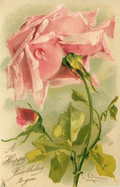 """Pink rose and bud, with bead of water. By Catherine Klein. From postcard set, """"Birthday Roses. Catherine Klein, Art Vintage, Vintage Cards, Vintage Flowers, Ranunculus Flowers, Iris Flowers, Exotic Flowers, Flowers Garden, Purple Flowers"""