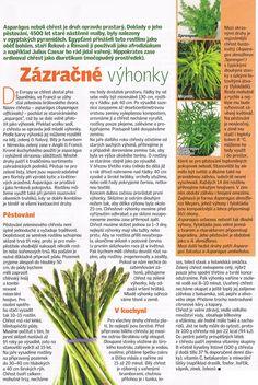- Okra, Natural Medicine, Gardening, Fitness, Nature, Plants, Syrup, Naturaleza, Gumbo