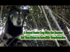 Dorothy: a Scared Senior Dog Bites Her Rescuer But Then Makes an Incredible Transformation. - YouTube
