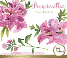 Mexican bougainvillea https://www.etsy.com/mx/listing/208891894/flores-bugambilias-en-acuarela-fuchsia #gardening #homeflowers #bougainville #fuchsia #cardsmaking #PNG