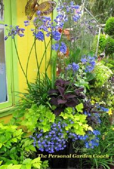 Love the color combination of perennials and annuals and different heights against the yellow:  blue, deep purple, greens.  Come on spring!
