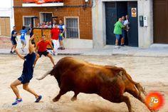 torodigital: Un toro de Julio de la puerta exhibido por la peñ...