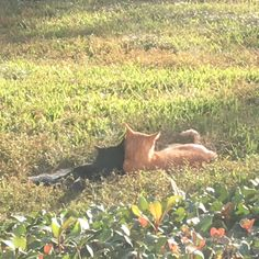 Two feral cats cuddling outside my window.Im totally not crying right now Cats Dogs Cute Cat Aesthetic, Nature Aesthetic, Aesthetic Photo, Aesthetic Pictures, Arte Peculiar, Photocollage, Doja Cat, Feral Cats, Cute Kittens