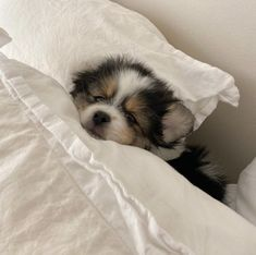Cute Baby Dogs, Cute Dogs And Puppies, Cute Babies, Doggies, Adorable Puppies, Cute Little Animals, Cute Funny Animals, Cute Little Dogs, Funny Pets