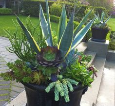 The Succulent Perch. #succulentssimplified