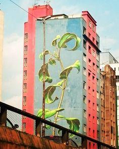 Mona Caron --- São Paulo, Brazil.