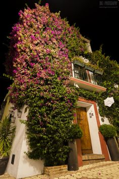 Marbella Old Town.Fotógrafo: David Gil Marbella Spain, Greenery, Home And Garden, David, Flowers, Plants, Bonito, Plant, Royal Icing Flowers