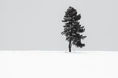 Akos Major / #photography #art