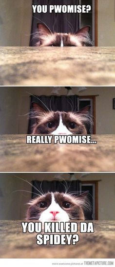This used to be me.. minus being a cat. :) <--  I laughed so hard at this!!