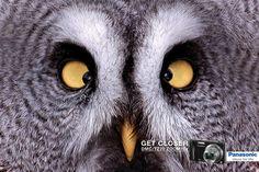 Creative Advertisements Using Animals - www.boostinspiration.com/advertisement/creative-advertisements/ - #Ads #Advertisements #Advertisement #Print