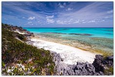 """""""Don't grow up too quickly, lest you forget how much you love the beach. Bahamas Island, Beach Bum, Perfect Place, Forget, Spaces, Water, Photography, Outdoor, Cow"""