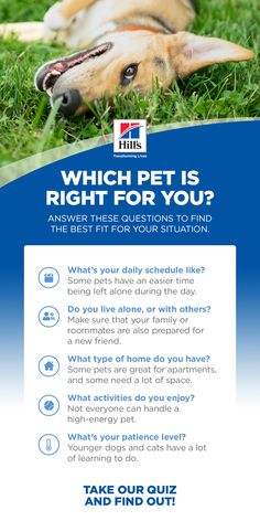 Figuring out the details of how to adopt a pet and worrying about the unknowns can feel overwhelming to prospective pet parents, but don't let that keep you from rescuing an animal. Just take the questions one at a time, until you know you're ready to commit to bringing home a new four-legged friend. Take our quiz to help you choose the right pet for you. Teacup Puppies, Lab Puppies, Baby Animals Pictures, Cute Baby Animals, Pet Care Tips, Dog Care, Rare Animals, Animals And Pets, Poodle Mix Breeds