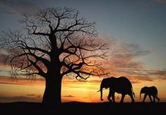 Vlies #fotobehang Silhouetten #Afrika