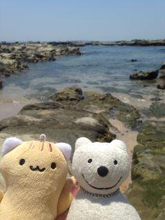 クマ散歩:三浦・岩礁のみちに品行方正なクマ出没 (間口湾2 Maguchi Bay 2) The Bear took a walk along Miura Reef!♪☆(^O^)/  #品行方正 #Bear