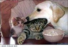 우리 엄마 먹지마