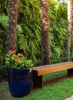 Jardim com banco de madeira e vaso azul com ixoras, criado pela paisagista Ana Paula Magaldi. A mistura de cores deixa a área externa ainda mais alegre!