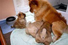Rudy with her babies