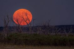The Full Harvest Moon Rising Along the Eastern Plains of Colorado 09-16-16  By Forrest Boutin Photography  https://instagram.com/forrestboutinphotography/ Prints available at: www.forrestboutin.com