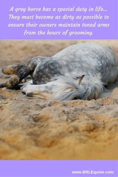 A grey horse has a special duty in life... They must become as dirty as possible to ensure their owners maintain toned arms from the hours of grooming. Dirty horse. Funny horse quote