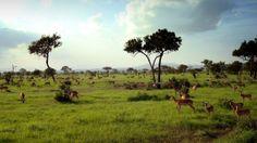 Mikumi National Park - Tanzania's alternative to the Serengeti