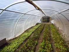 """$80k Year Farming on 1/3 Acre: """"Square Foot Gardening Meets Commercial Farming"""" 
