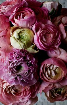 Blooms By Mimi Thorisson #flowers #peonies