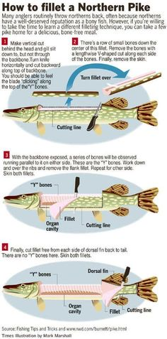 How to fillet a pike effectively Have fun Wie man einen Hecht effektiv filetiert Viel Spaß beim Angeln How to fillet a pike effectively Have fun fishing - Kayak Bass Fishing, Bass Fishing Tips, Best Fishing, Fishing Tricks, Fishing Stuff, Fishing Rods, Fishing Basics, Fishing Guide, Walleye Fishing Tips
