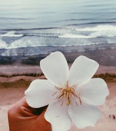 Summer Sun, Summer Of Love, Summer Vibes, I Need Vitamin Sea, Strand, Scenery, Tropical, Waves, Floral