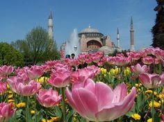 Tulips Outside of Hagia Sofia  | Τουλίπες έξω από την #Αγία #Σοφία
