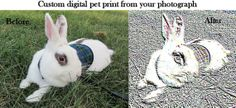 Custom digital pet  print from your own photograph . by turvytopsy, $23.00- My Pikachu!!!!