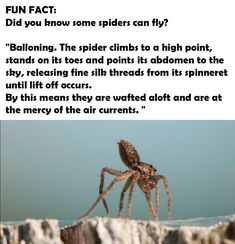 47 Best spiders images in 2019