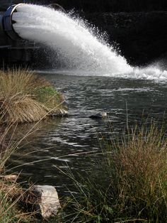Tubería desaguando agua del pantano. www.elhogarnatural.com
