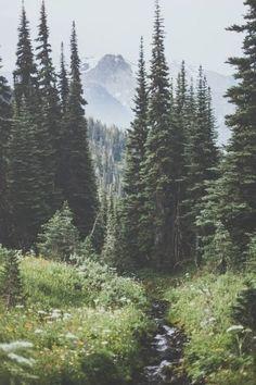 Stunning Landscape Photo Collection on Society6 #LandscapeForest