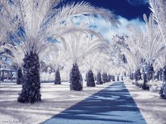 At first glance, it may appear that these are photos of some snowy wonderland. But upon closer inspection you will see that these landscapes are made up of tropical foliage and surroundings. Netherlands-based photographer Maria Netsounski took these vibrant images using infrared technology; hence the name of this series, IR.